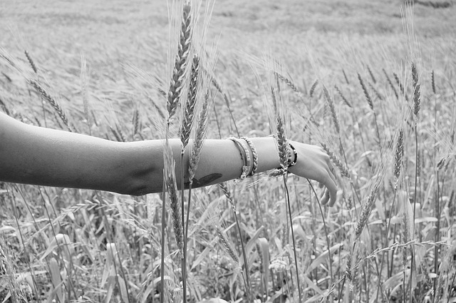 wheat-925760_640